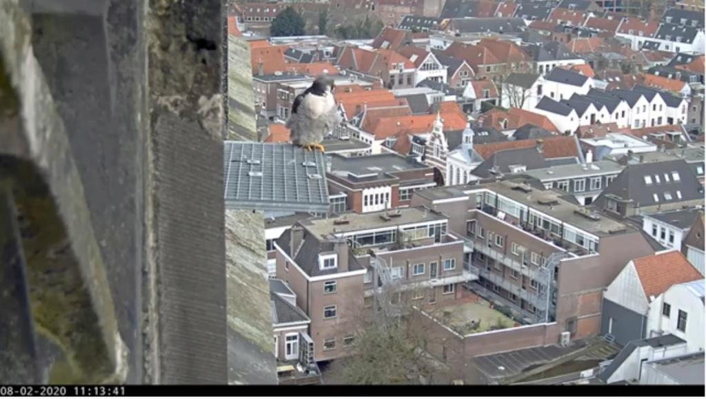 Amersfoort/OLV toren. Joris en V (1PF) - Pagina 3 Valk_a80