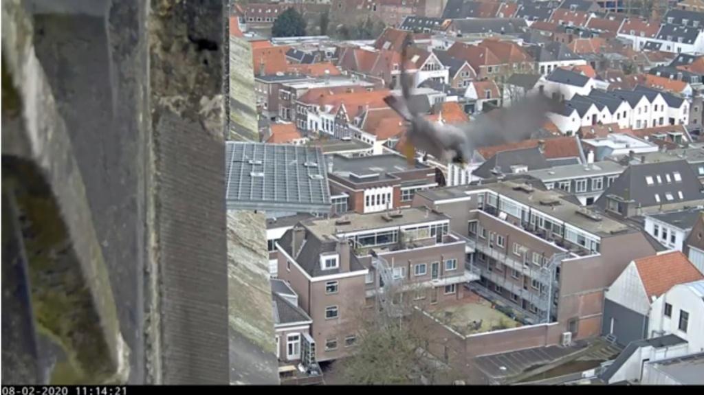 Amersfoort/OLV toren. Joris en V (1PF) - Pagina 3 Valk_a81