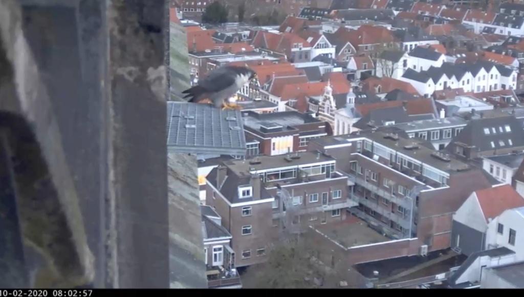 Amersfoort/OLV toren. Joris en V (1PF) - Pagina 4 Valk_a82