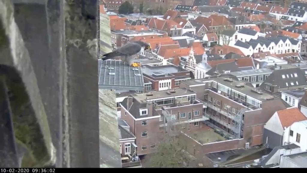 Amersfoort/OLV toren. Joris en V (1PF) - Pagina 4 Valk_a83