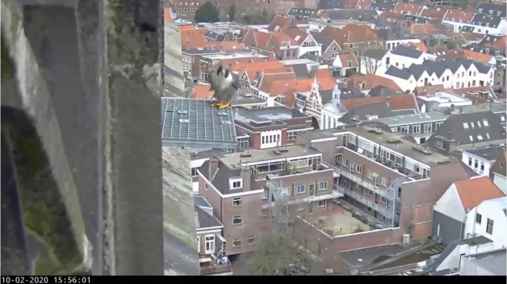 Amersfoort/OLV toren. Joris en V (1PF) - Pagina 4 Valk_a84