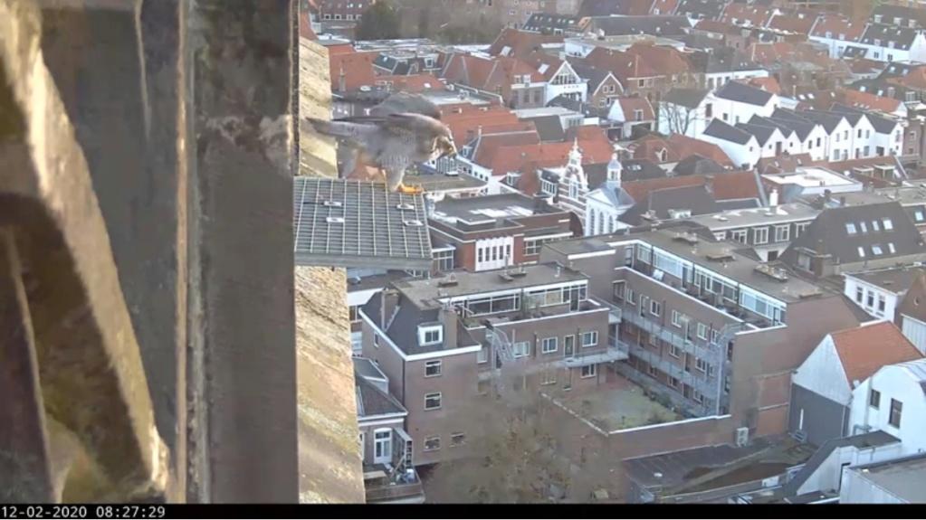 Amersfoort/OLV toren. Joris en V (1PF) - Pagina 4 Valk_a86