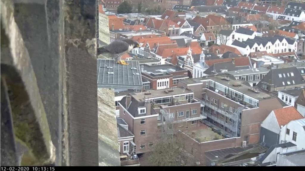 Amersfoort/OLV toren. Joris en V (1PF) - Pagina 4 Valk_a87