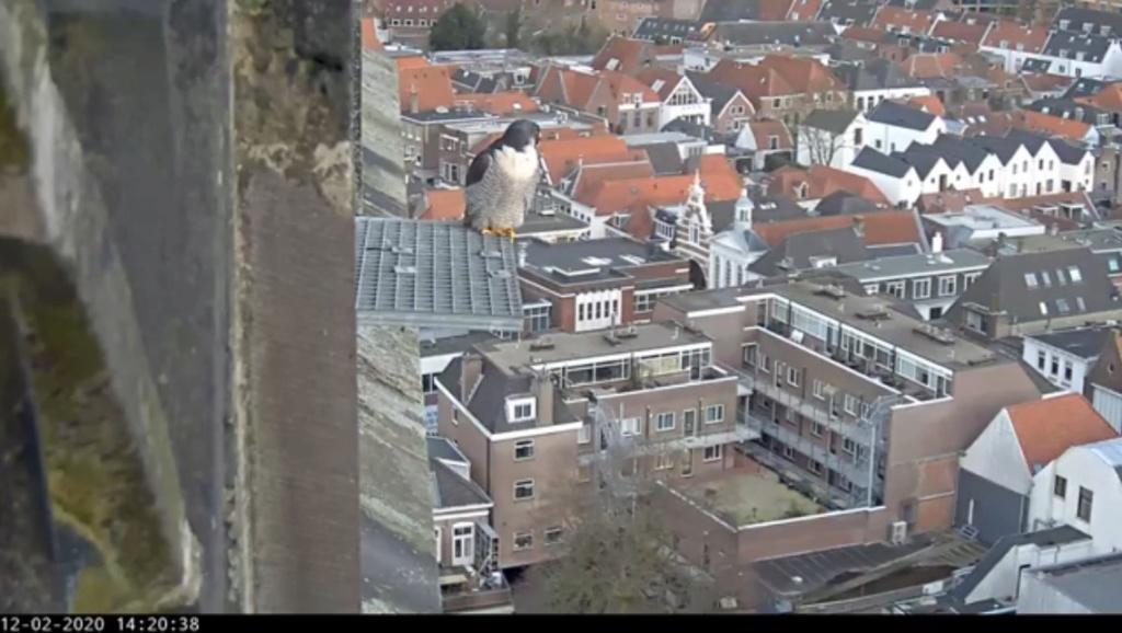 Amersfoort/OLV toren. Joris en V (1PF) - Pagina 4 Valk_a88