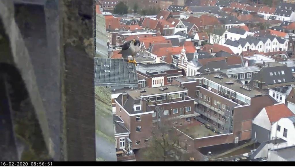 Amersfoort/OLV toren. Joris en V (1PF) - Pagina 4 Valk_a90
