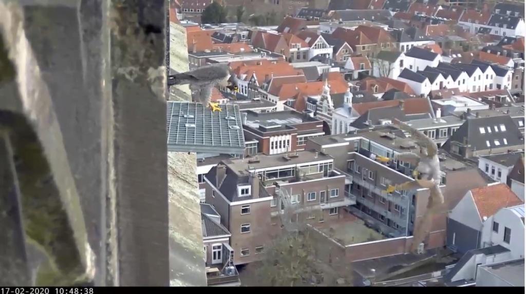 Amersfoort/OLV toren. Joris en V (1PF) - Pagina 4 Valk_a91