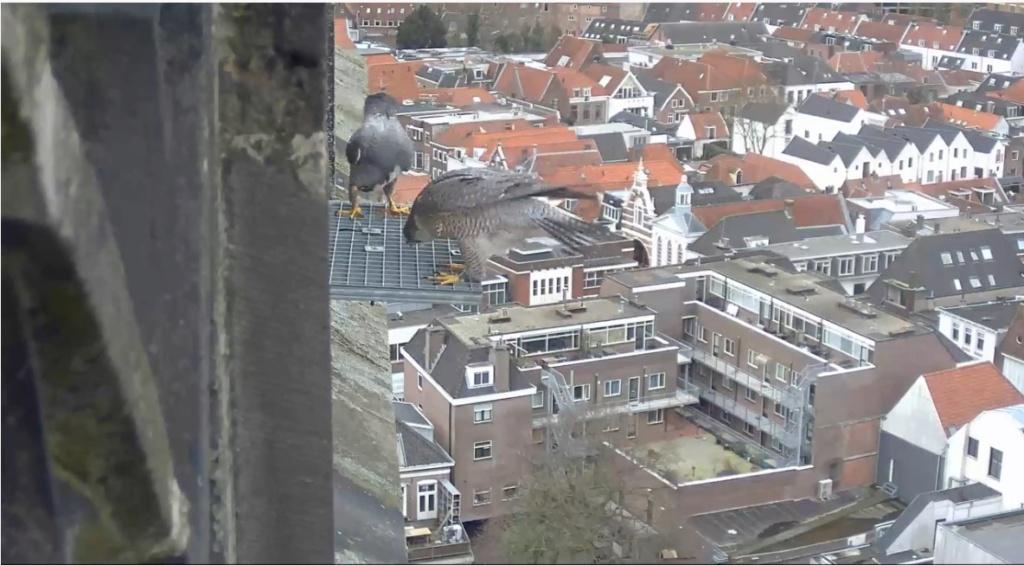 Amersfoort/OLV toren. Joris en V (1PF) - Pagina 4 Valk_a93