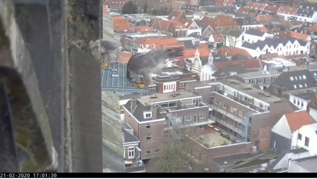 Amersfoort/OLV toren. Joris en V (1PF) - Pagina 4 Valk_a96