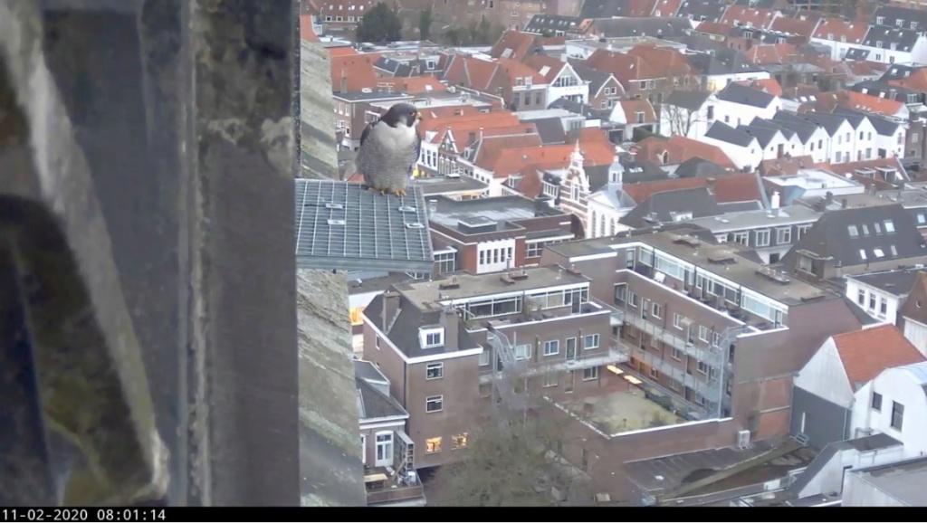 Amersfoort/OLV toren. Joris en V (1PF) - Pagina 4 Valkam10