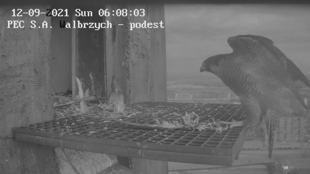 Wałbrzych PEC - Pagina 4 Walbrz44