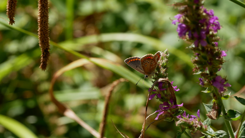 Guêpes, papillon et libellule 01081911