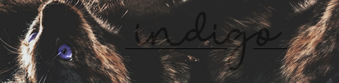 彡Meeting Bunnies Almelo 29/09/19  Indigo15