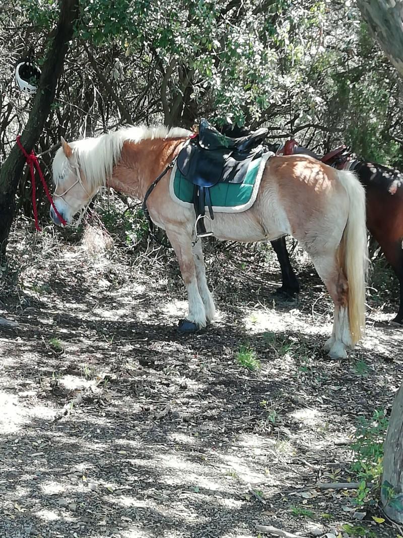 Razze equine 20191010