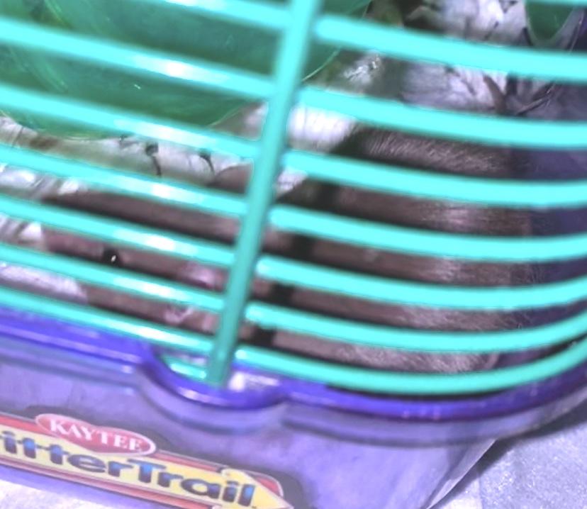 Meet my babies 6e0a8010