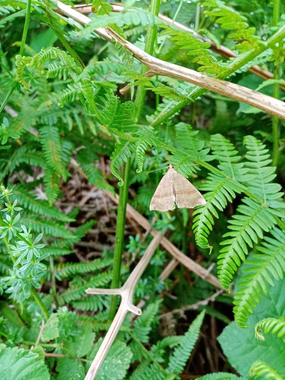 Papillon indéterminé Img_2010