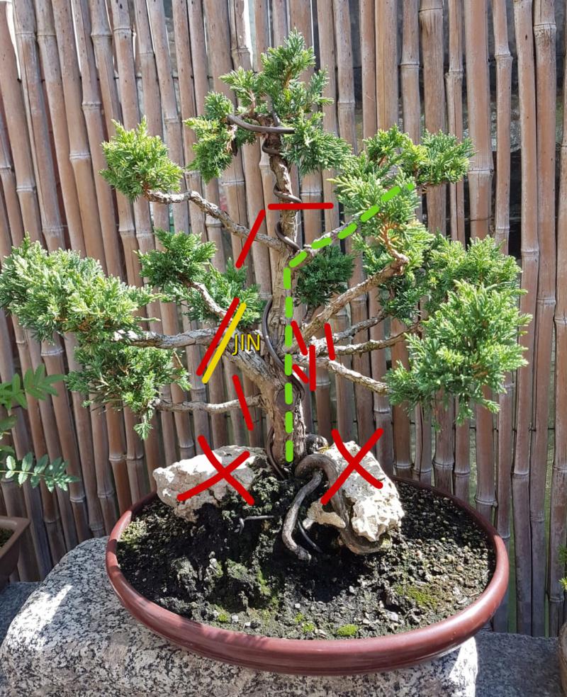 Remodelación Juniperus Chinensis sobre Piedra  3_nuev10