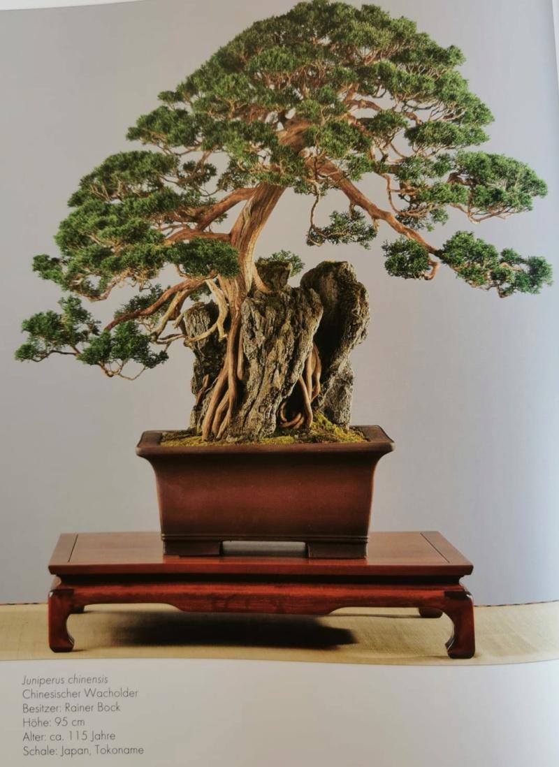 Remodelación Juniperus Chinensis sobre Piedra  Junipe12