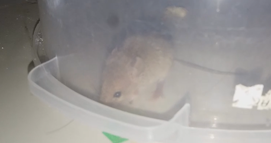 What Should I Do with this Mouse? Rat110