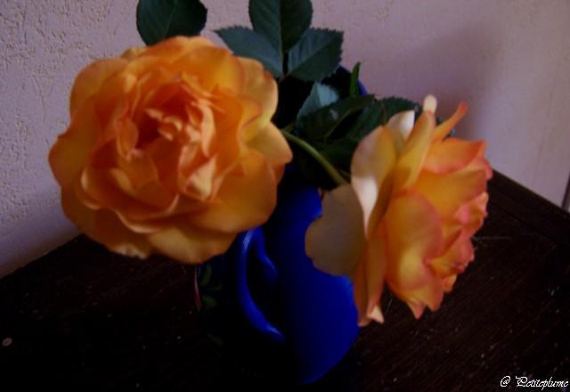 J'adore les roses 100_6113