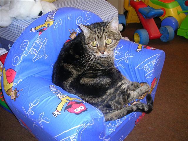 Perdu mars 2009 à Colomiers, Chipie, chat femelle tigrée Perduc11