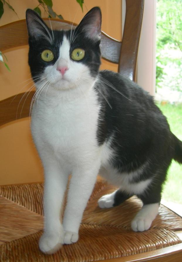 Trouvé 3 chats à Colomiers, juin 2009 Pornic10