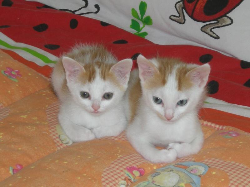 Elégie et Edux Rscn0911