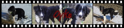 canicross et âge du chien! Oyka1011