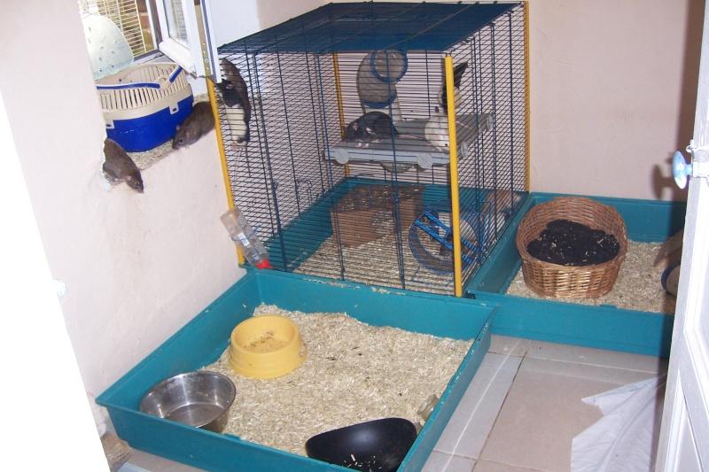 CHEZ RATTOUX LAND!!! Rats_027