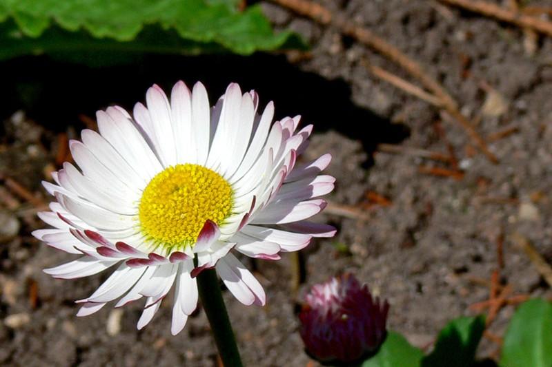 Quelques fleurs P1030411