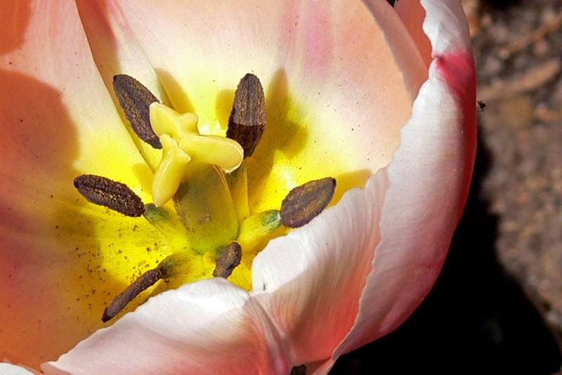 Quelques fleurs P1030510