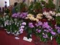 exposition d'orchidées à limoges P1040510