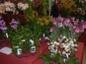 exposition d'orchidées à limoges P1040511