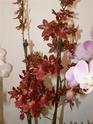 exposition d'orchidées à limoges P1040513
