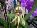 exposition d'orchidées à limoges P1040518