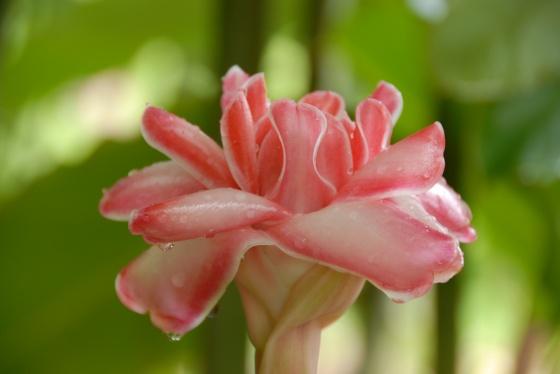 Fleur116
