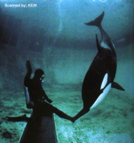 [Photos] Les orques captives quand elles étaient bébé - Page 4 Finna_10