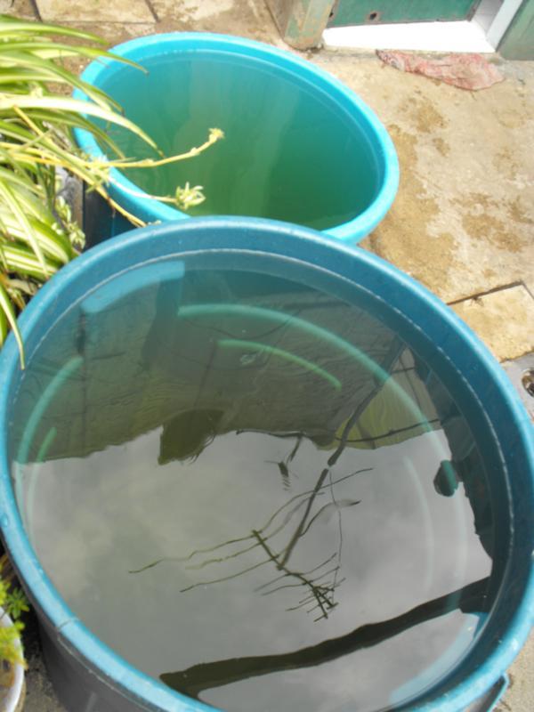 Icela Martinez: Accesibilidad al agua en la ciudad de México 7_smt_10