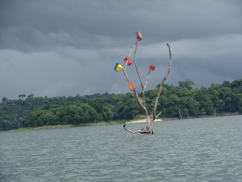 Les communautés Kunas de Madungandi et Pintupo (Panama) Pintup10