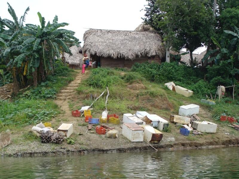Les communautés Kunas de Madungandi et Pintupo (Panama) Pintup11