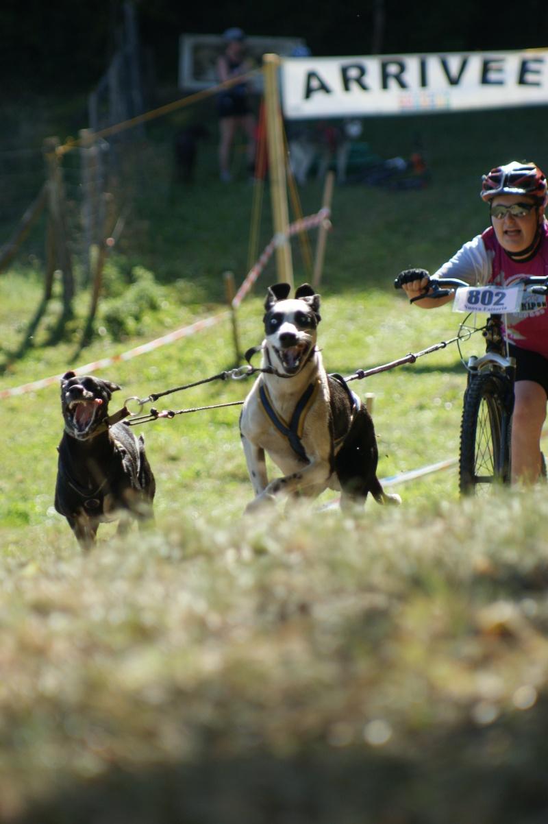 """Le team """"des chiens, des sport, une seule passion"""" Dsc02511"""