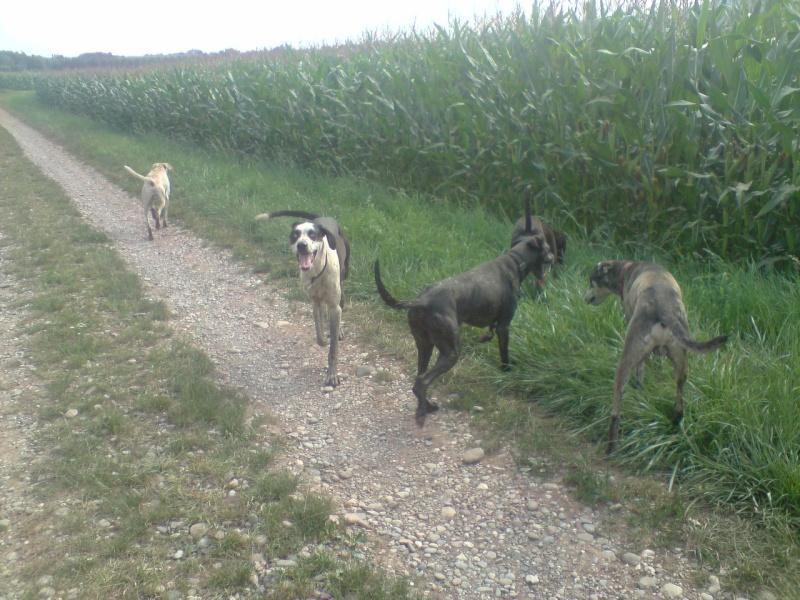 """Le team """"des chiens, des sport, une seule passion"""" P1307010"""