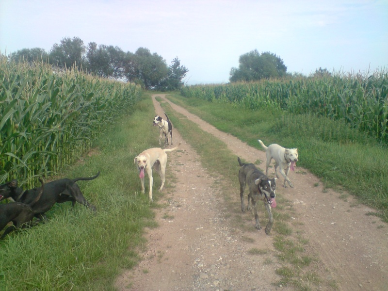 """Le team """"des chiens, des sport, une seule passion"""" P1307013"""