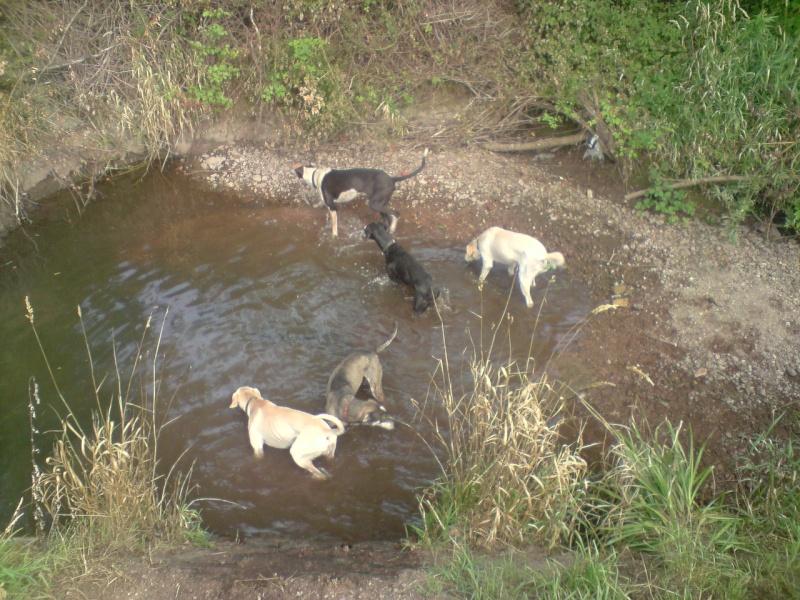 """Le team """"des chiens, des sport, une seule passion"""" P1307014"""