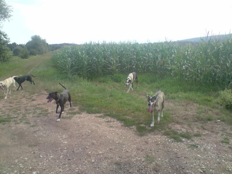 """Le team """"des chiens, des sport, une seule passion"""" P1307015"""