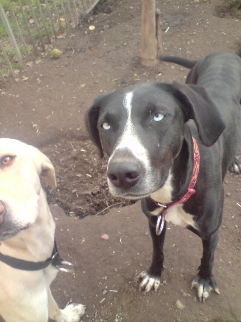 """Le team """"des chiens, des sport, une seule passion"""" P2111015"""