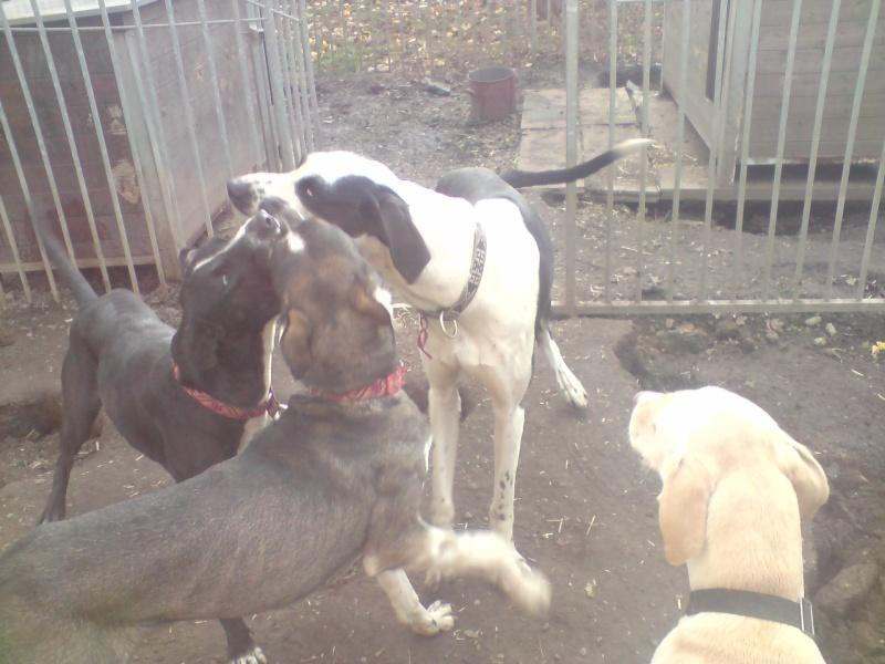 """Le team """"des chiens, des sport, une seule passion"""" P2111017"""