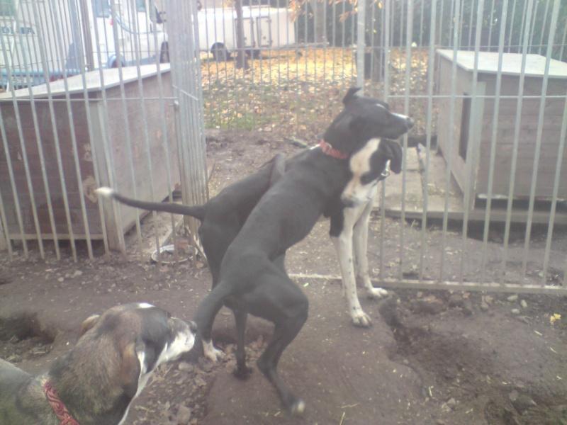 """Le team """"des chiens, des sport, une seule passion"""" P2111018"""