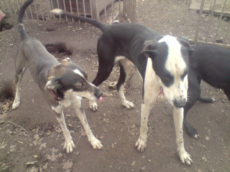 """Le team """"des chiens, des sport, une seule passion"""" P2111019"""