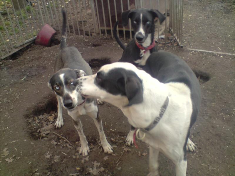 """Le team """"des chiens, des sport, une seule passion"""" P2111020"""