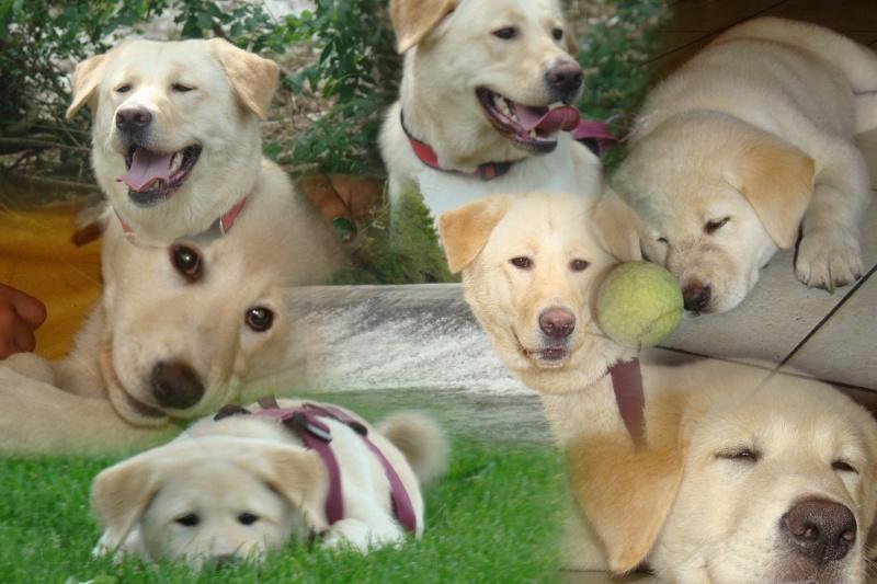 Le labrador (avec video et photos de Djuna) Jacott10